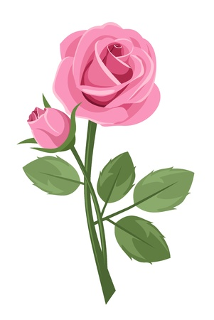 rosebud: Pink rose with stem isolated on white.  illustration.