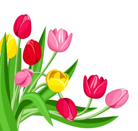 red tulip: Colored tulips. Vector illustration.