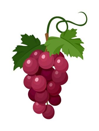 violet red: Red grapes. Vector illustration. Illustration