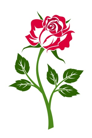 Red rose with stem. Vector illustration. Vector