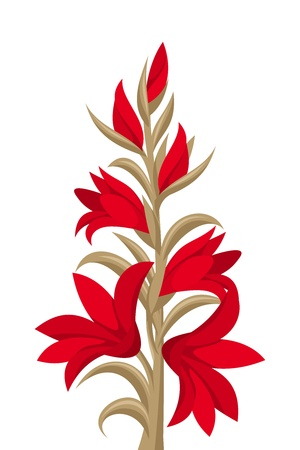 Red gladiolus flowers.  illustration. Vector