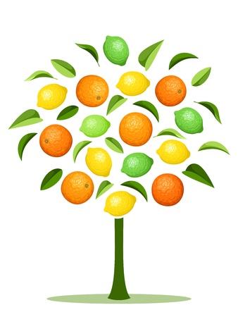 多様な柑橘系の果物と抽象的な木。
