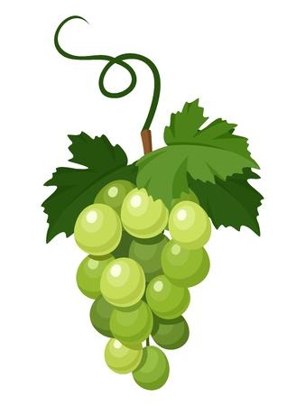 緑色のブドウの束。イラスト。