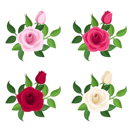 Set of four colored roses. Vector illustration. Vector