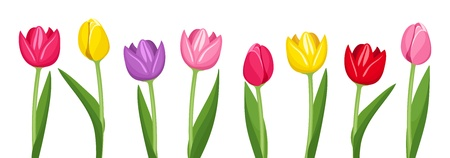 tulips isolated on white background: Tulips of various colors illustration. Illustration