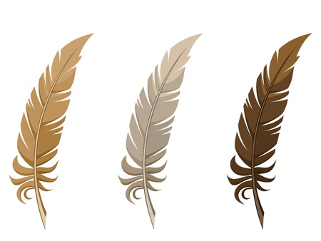 feather quill: Set of three feathers  Vector illustration