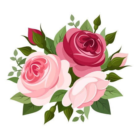english rose: Red and pink roses  Vector illustration