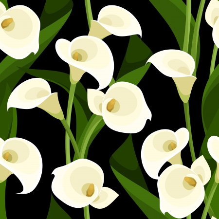 calla lily: Seamless pattern with white calla lilies on black  Vector illustration