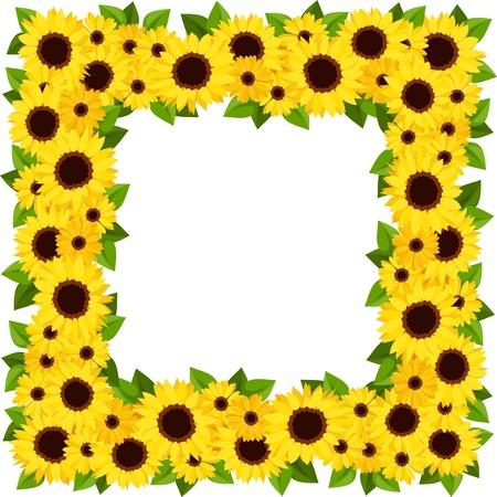 calendula: Sunflowers frame  Vector illustration  Illustration