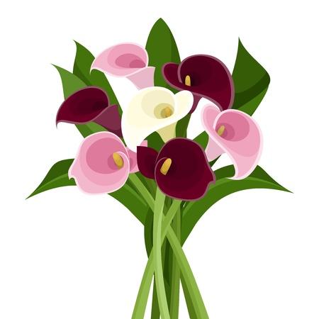 Bouquet di colore calla gigli, vettore, illustrazione Vettoriali