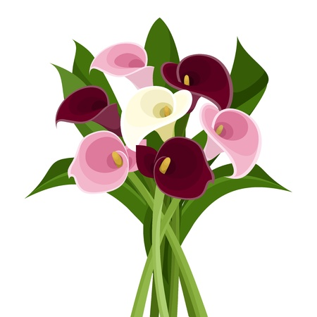 pink lily: Bouquet of colored calla lilies  Vector illustration