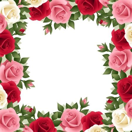 rose garden: Colored roses frame  Vector illustration
