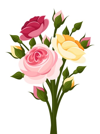 isolated roses: Colorful roses branch illustration  Illustration
