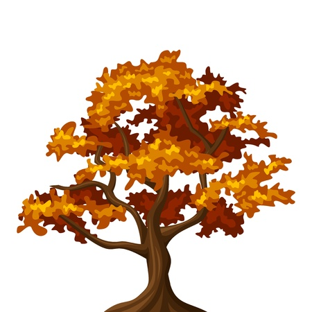 deciduous forest: Autumn oak tree  Vector illustration