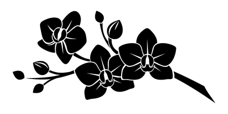 Black silhouette of orchid flowers   Vector