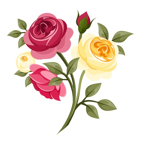 english rose: Colorful roses   Illustration