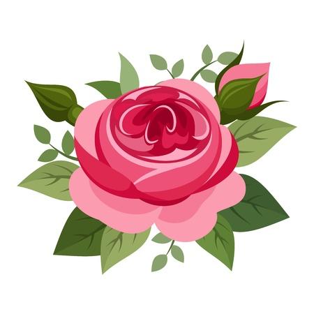 tea rose: Red rose  Vector illustration  Illustration