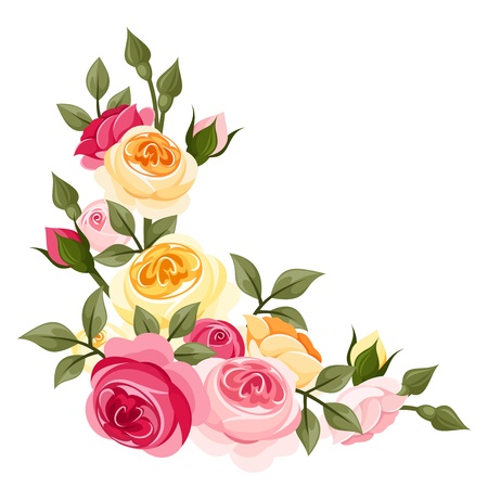 rose bush: Pink and yellow vintage roses  Vector illustration  Illustration