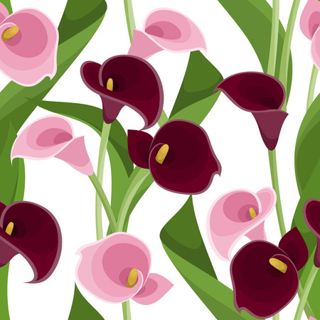 calla lily: Seamless pattern with pink and purple calla lilies on white  Vector illustration