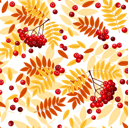 raceme: Seamless pattern with rowan leaves and rowanberries  Vector illustration