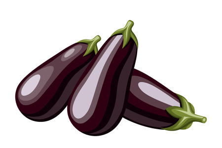 Eggplants  Vector illustration  Vector