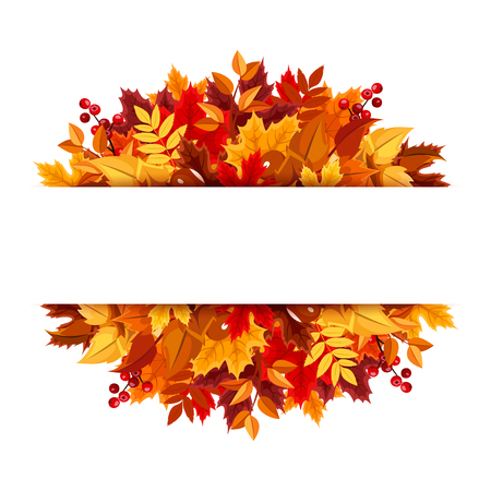 autumn background: Autumn leaves background  Vector illustration  Illustration