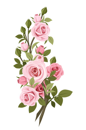 Vintage pink roses branch  Vector illustration  Illustration