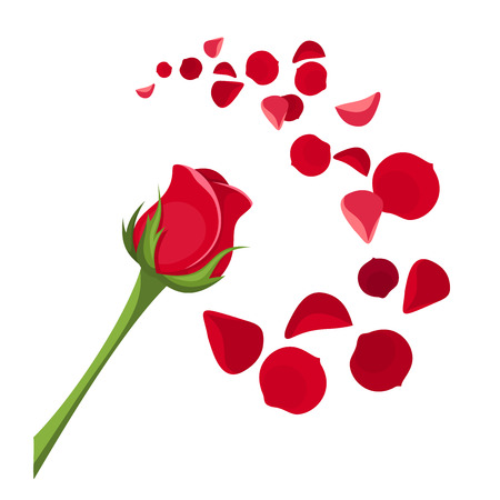 Red rose and petals Vector illustration