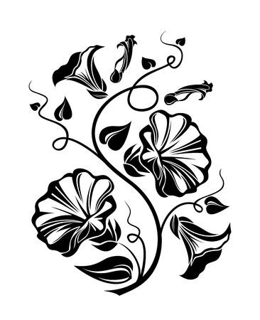 fleurs des champs: Liseron silhouette noire Vector illustration Illustration