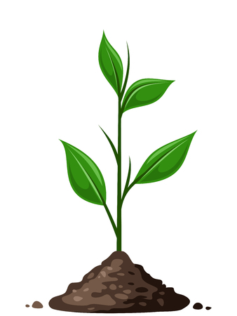 thrive: Green sprout in the ground  Vector illustration