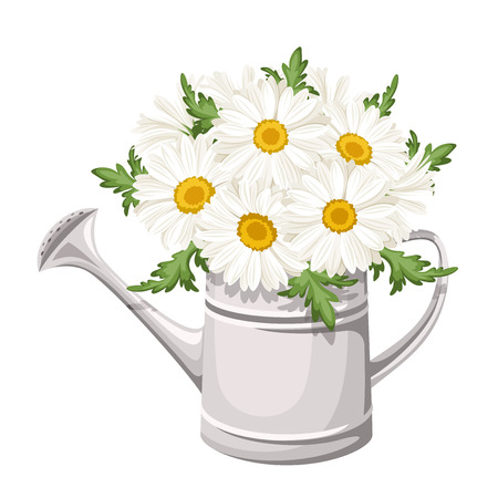 floriculture: Bouquet of daisies in watering can  Vector illustration  Illustration