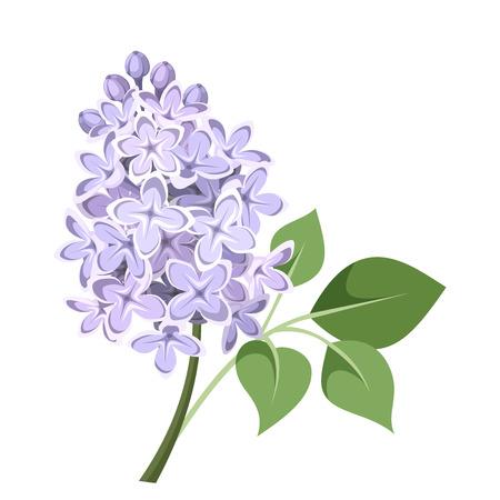 ライラック色の花のベクトル図の枝
