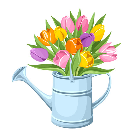 country life: Bouquet of tulips in watering can  Vector illustration