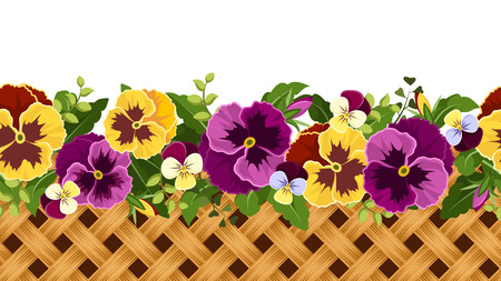 pansies: Horizontal seamless background with pansy flowers and wicker  Vector illustration  Illustration