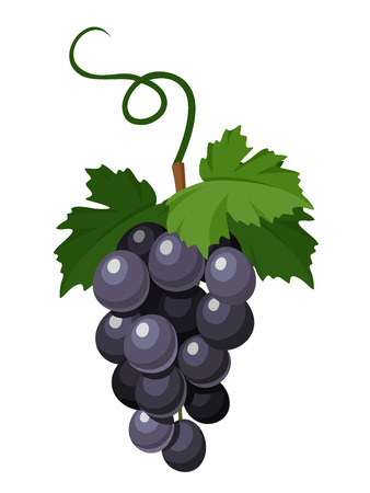 clusters: Bunch of black grapes  Vector illustration