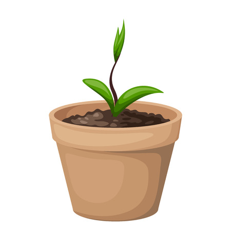 thrive: Green sprout in the clay flowerpot