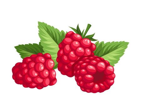 Raspberry Vektor-Illustration