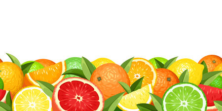 Horizontal seamless background with citrus fruits  Vector illustration  Vector