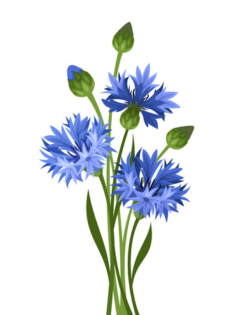 Bouquet of blue cornflowers  Vector illustration