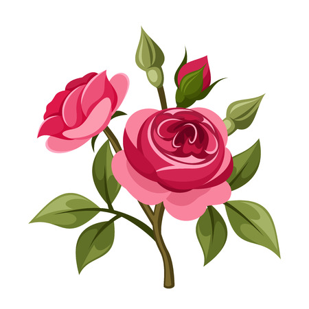 Branch of red roses illustration  Vector