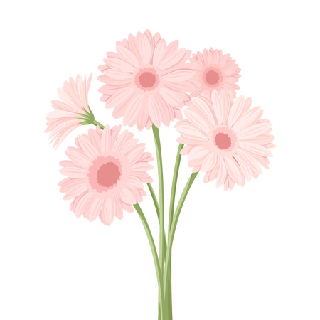 gerber: Bouquet of pink gerbera flowers illustration