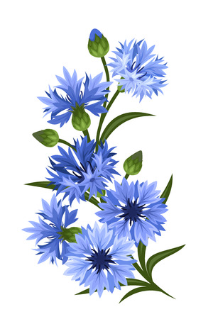 stalk flowers: Branch of blue cornflowers  Vector illustration