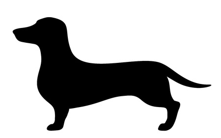 hound dog: Dachshund dog. Vector black silhouette.