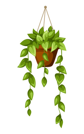 houseplant: Green houseplant in a pot. Vector illustration.