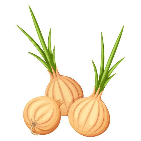 haulm: Three brown onions. Vector illustration.