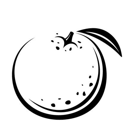 Orange fruit. Vector black contour drawing. Vectores