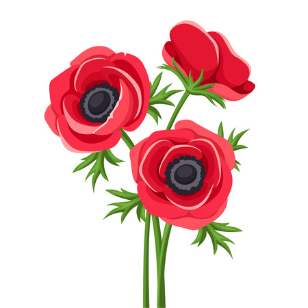 Red anemone flowers. Vector illustration.