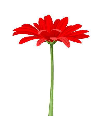 single flowers: Red gerbera with stem. Vector illustration. Illustration