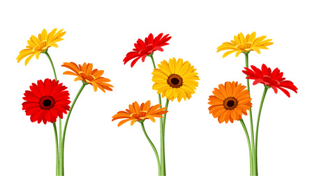 Gerbera flowers. Vector illustration. Vectores
