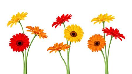 tallo: Gerbera flores. Ilustraci�n del vector.